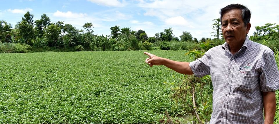 Former firm director absconds abroad, leaving Vietnamese farmers heavily indebted