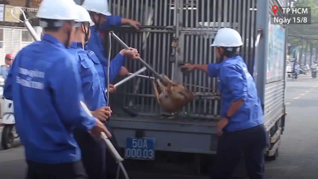 Ho Chi Minh City begins removing stray dogs from downtown streets