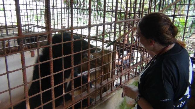 Vietnamese farmer gives five caged bears to animal welfare charity