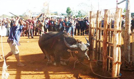 In Vietnam, people must chip in for controversial buffalo-slaying festival