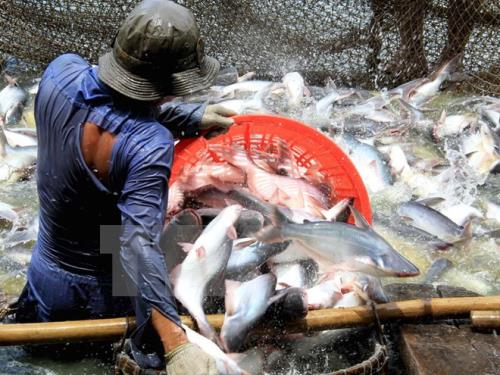 US cuts anti-dumping taxes on Vietnamese catfish