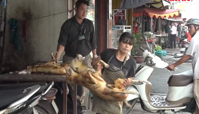 Sudden raid sends sellers rushing away with dog meat in Ho Chi Minh City