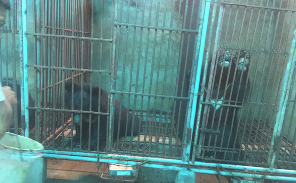 Vietnam police check alleged illegal bear farm on tip-off, find only chickens