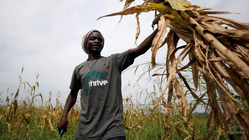 Hi-tech peer-to-peer networks let Nigerian farmers log on for cash