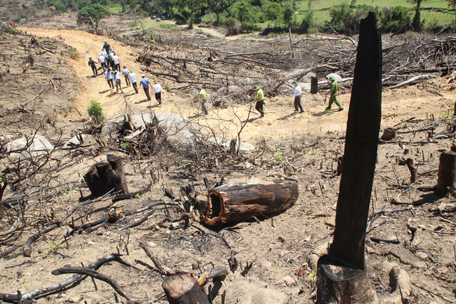 A section of the forest in An Hung Commune is destroyed by the defendants. Photo: Tuoi Tre