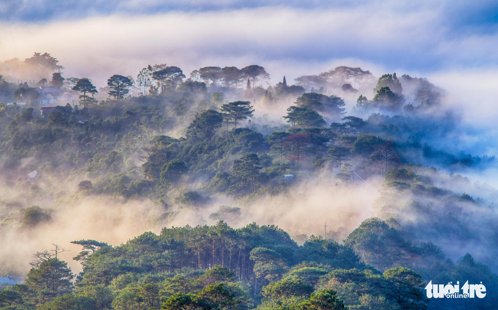 A forest in Da Lat is covered in fog in the early morning hours. Photo: Tuoi Tre
