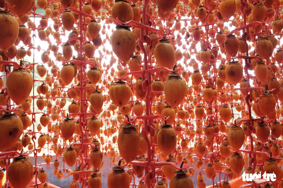 Persimmons are hung to dry in glass houses. Photo: Tuoi Tre