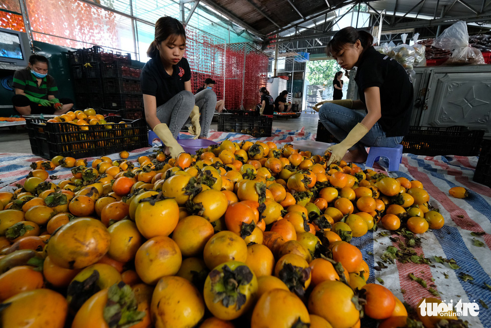 The fruit is selected to guarantee the best quality. Photo: Tuoi Tre