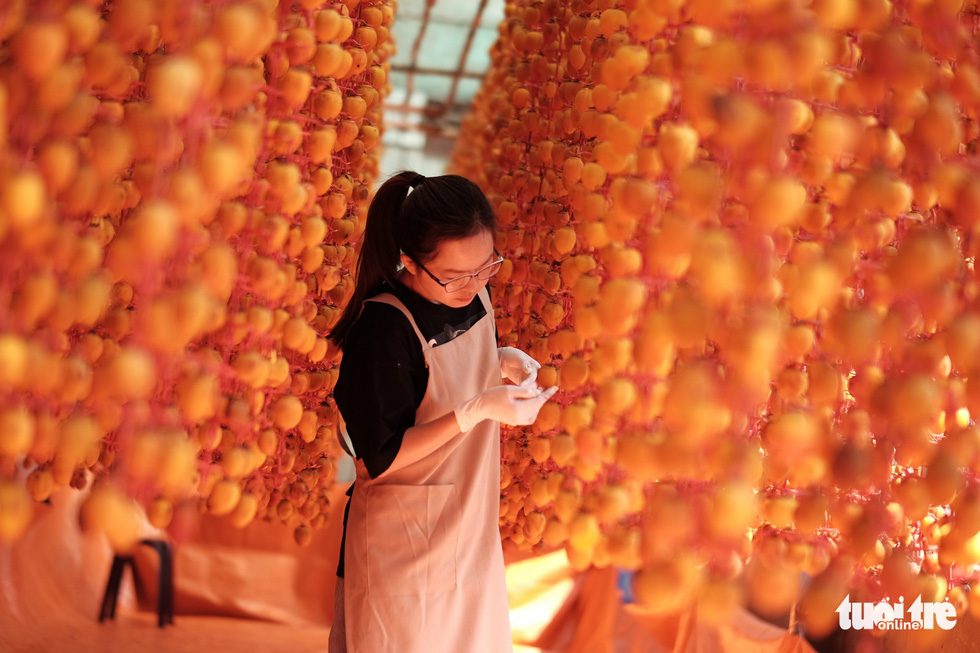 The persimmons require regular massaging to come out with the best quality. Photo: Tuoi Tre