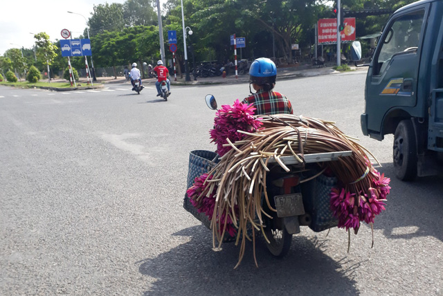A woman carries water lilies for sale in An Giang Province, southern Vietnam. Photo: Tuoi Tre