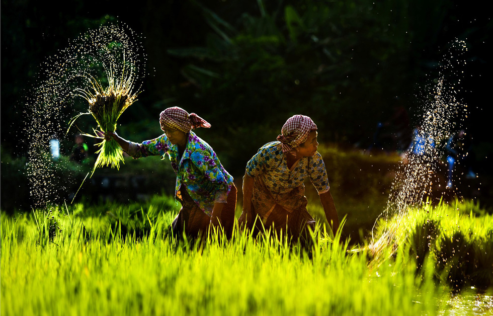 "Photo ""Vu dieu tren dong"" (The dance in rice paddles) by Ly Viet Dung"