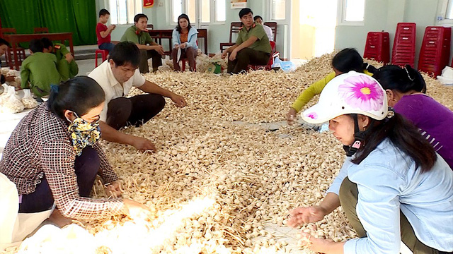 'Garlic kingdom' in Vietnam struggles to sell its spice