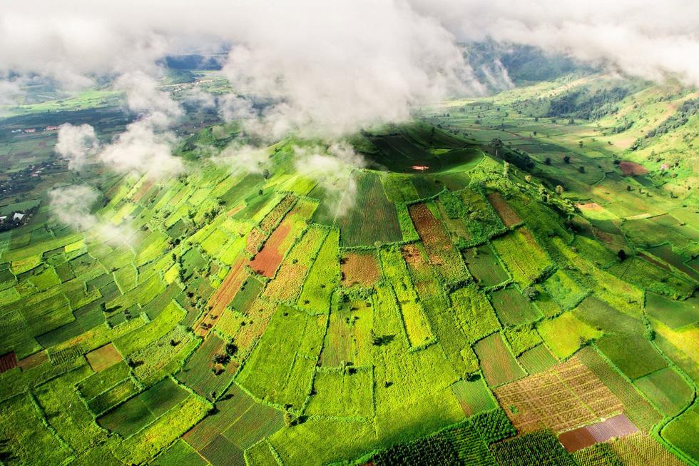 Wild sunflower fest kicks off in Vietnam's Central Highlands