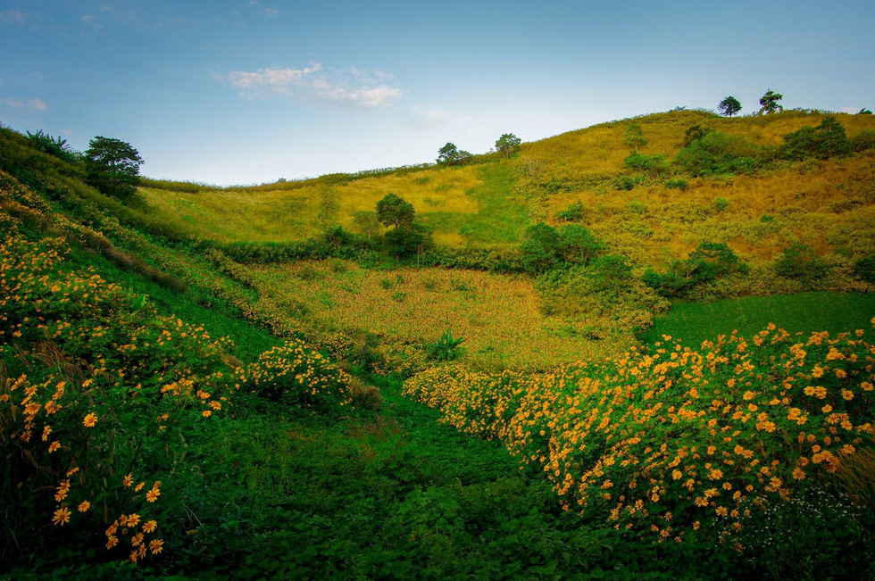 Wild sunflowers bloom near the Chu Dang Ya Extinct Volcano.