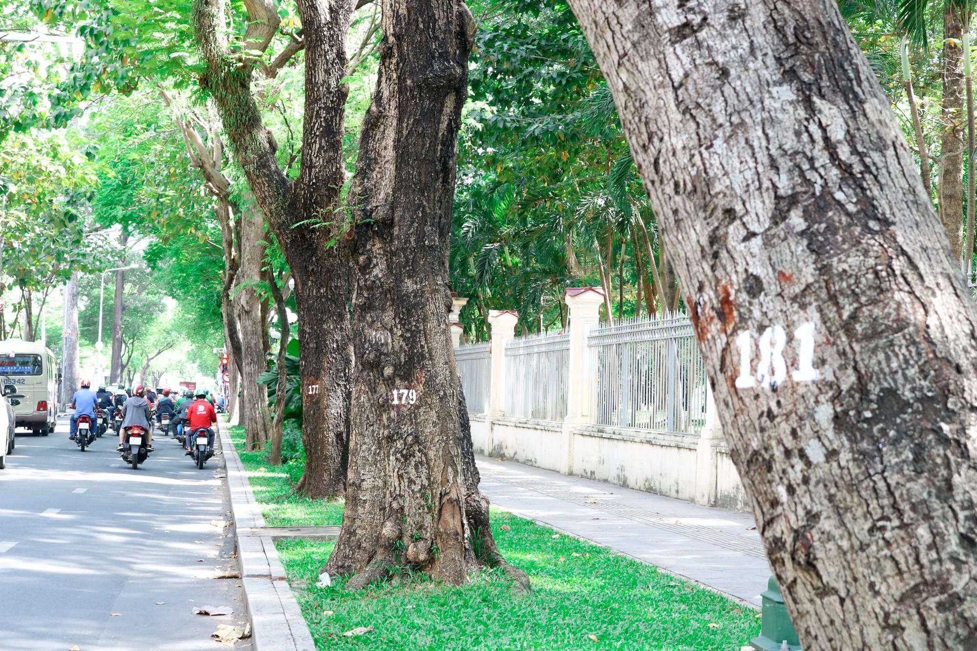Tamarinds an integrated part of Saigon