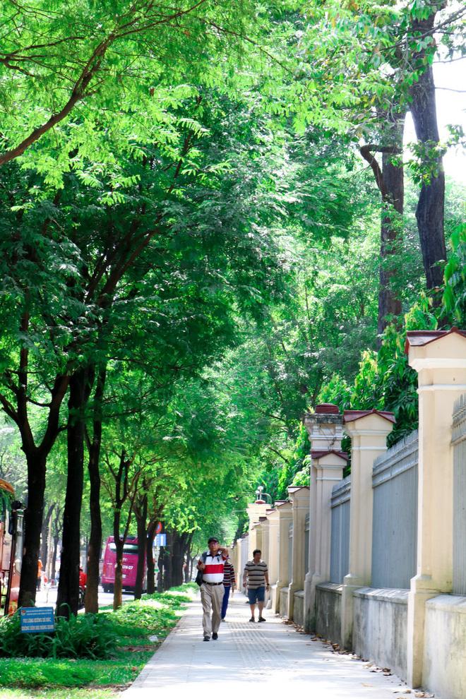 Pedestrians walk under tamarinds on a street in Ho Chi Minh City, Vietnam. Photo: Tuoi Tre