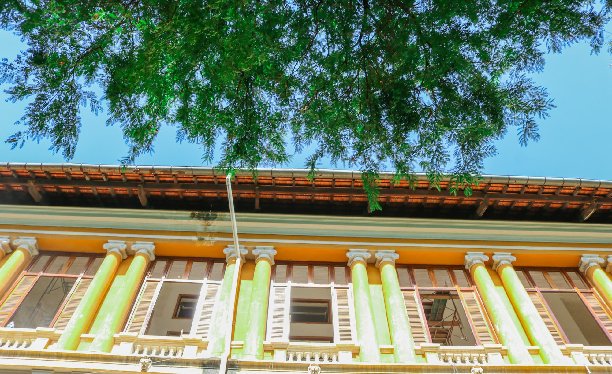 Tamarind leaves are pictured near a French-style building in Ho Chi Minh City, Vietnam. Photo: Tuoi Tre