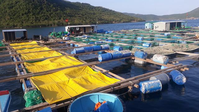 Cage farming at the Van Phong Bay. Photo: Tuoi Tre
