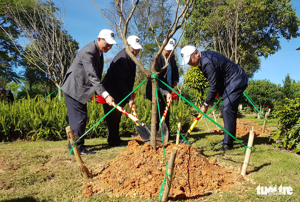 A sakura tree is planted in Da Lat City, Vietnam, November 21, 2018. Photo: Tuoi Tre