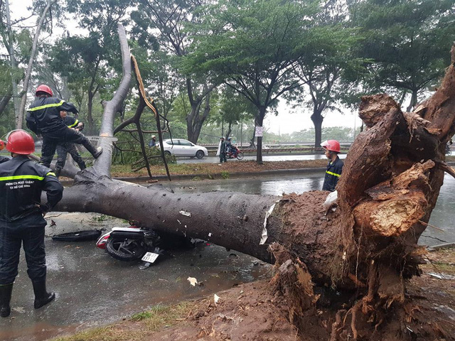 One killed, another injured as gusts knock down trees in Ho Chi Minh City