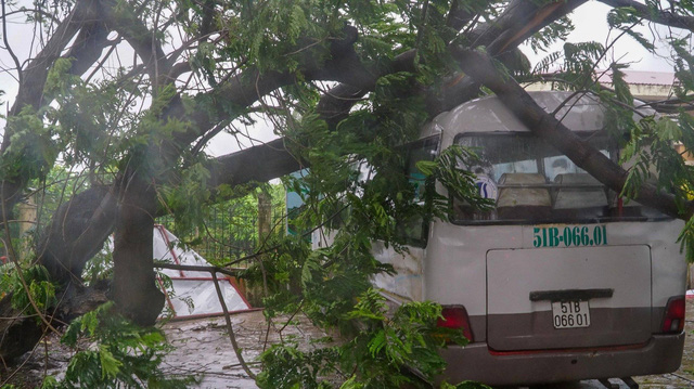 A tree falls on a school bus in Can Gio District, Ho Chi Minh City on November 25, 2018. Photo: Tuoi Tre