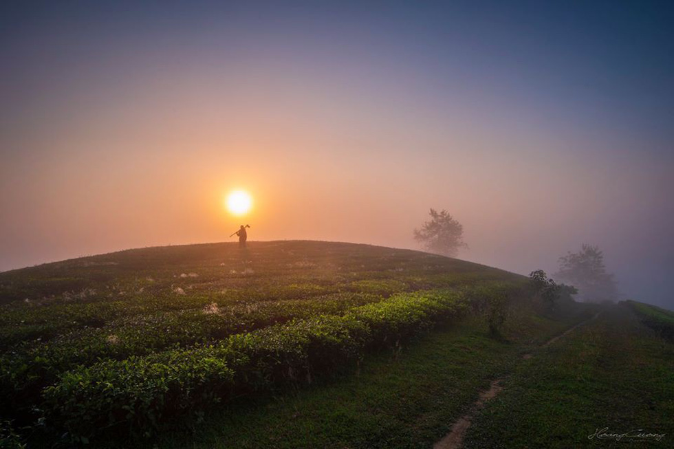 Tea hill farm turns into tourist attraction in northern Vietnam