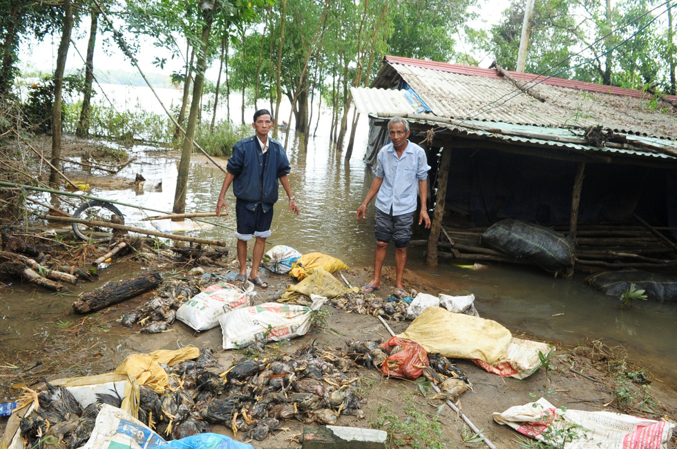 Farmers reel from mass livestock death after severe floods rack central Vietnam