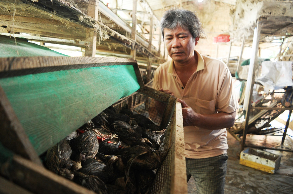 A man shows quails drowned in floodwaters at his farm in Quang Nam Province, central Vietnam, December 12, 2018. Photo: Tuoi Tre