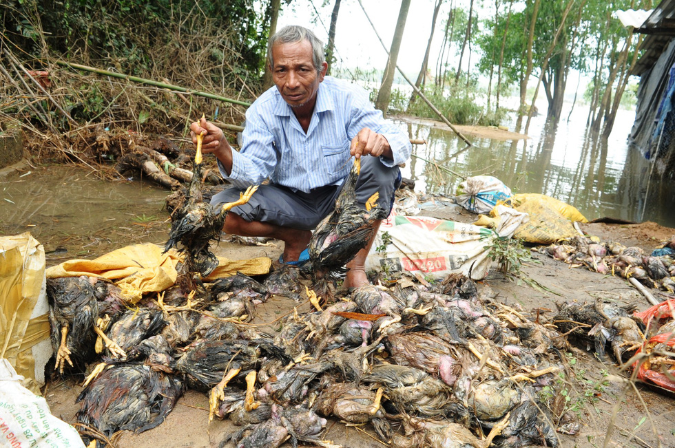A farmer is seen with chickens drowned in floodwaters in Quang Nam Province, central Vietnam, December 12, 2018. Photo: Tuoi Tre