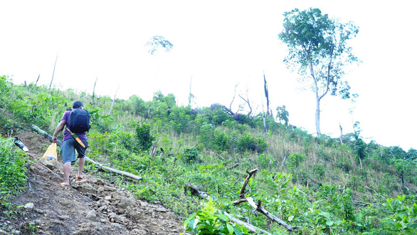 A man walks up a hill full of stumps in Quang Nam Province, central Vietnam. Photo: Tuoi Tre