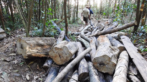 Central Vietnamese forest suffers from illegal logging, lack of oversight