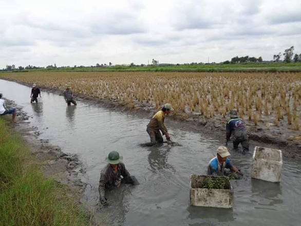 Farmers catch fish in a ditch in southwestern Vietnam. Photo: Tuoi Tre
