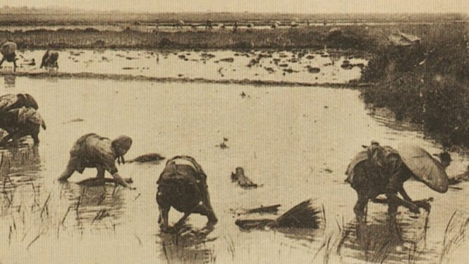 WWII Vietnamese immigrants to France revive rice cultivation in its breadbasket Camargue