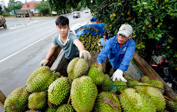 China's tightened imports could hurt Vietnamese farm produce: forum