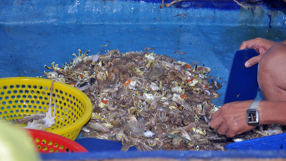 Seafood is seen on a boat in Vietnam. Photo: Tuoi Tre