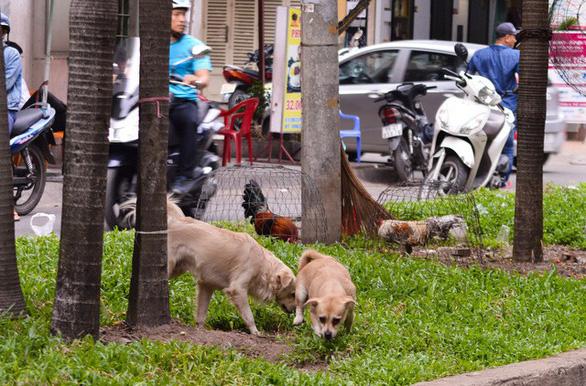 Hanoi, Da Nang to tighten management of pets