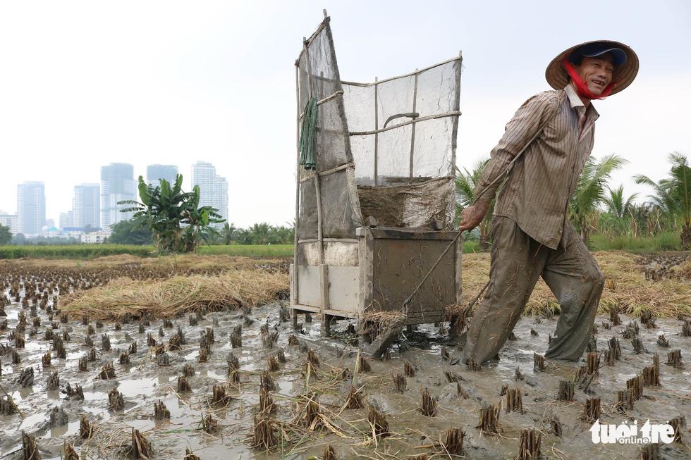 A farmer pulls a grain-removing tool in his field in Ho Chi Minh City, Vietnam. Photo: Tuoi Tre
