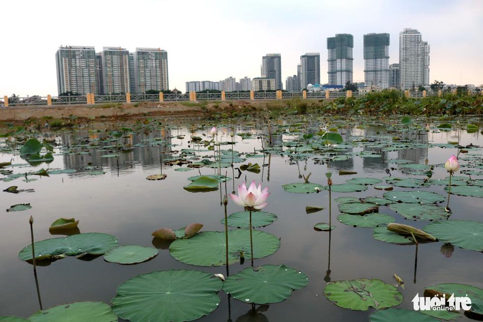 A lotus lake in the Thanh Da islet of Ho Chi Minh City, Vietnam. Photo: Tuoi Tre