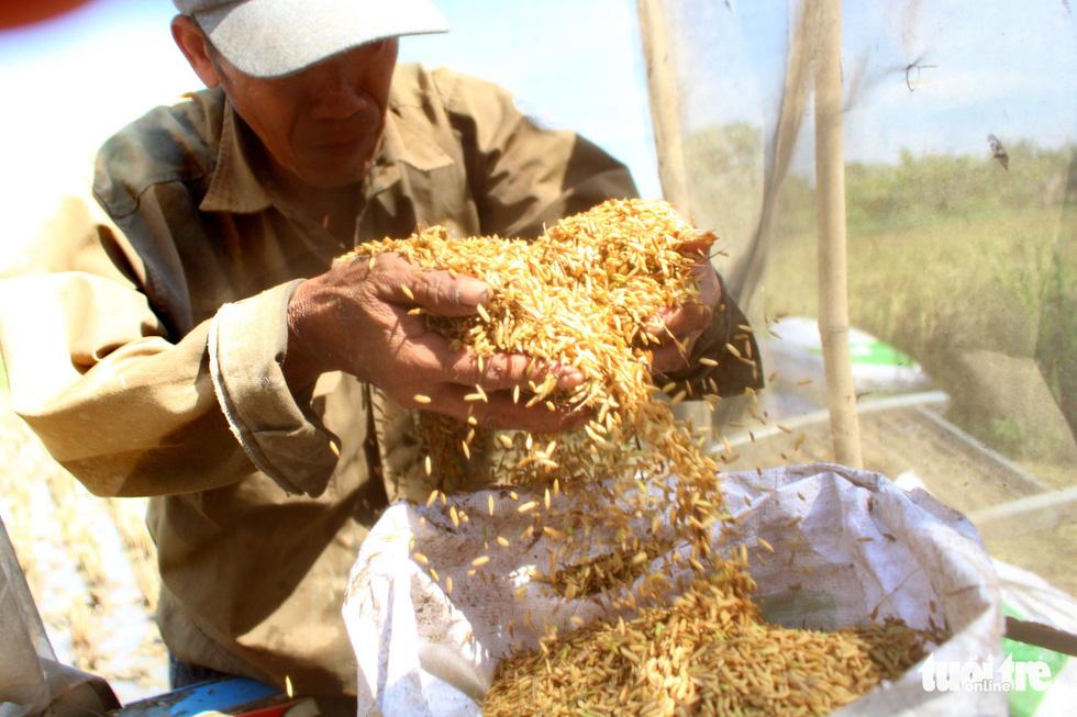 A farmer holds rice in Ho Chi Minh City, Vietnam. Photo: Tuoi Tre