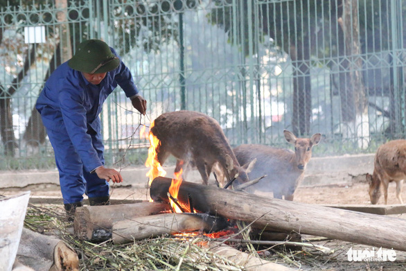 Hanoi zoo turns up the heat as cold spell freezes city