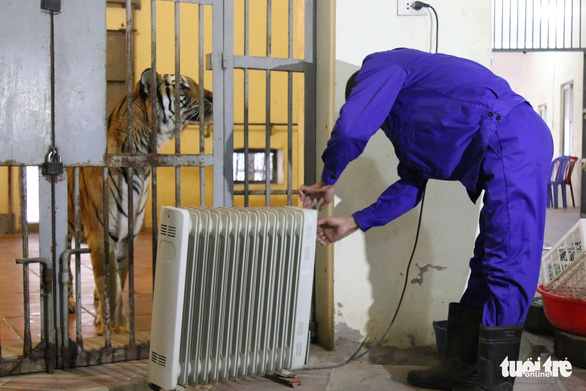 A zookeeper adjusts the temperature on a heater outside the tiger enclosure at Thu Le Zoo in Hanoi. Photo: Tuoi Tre