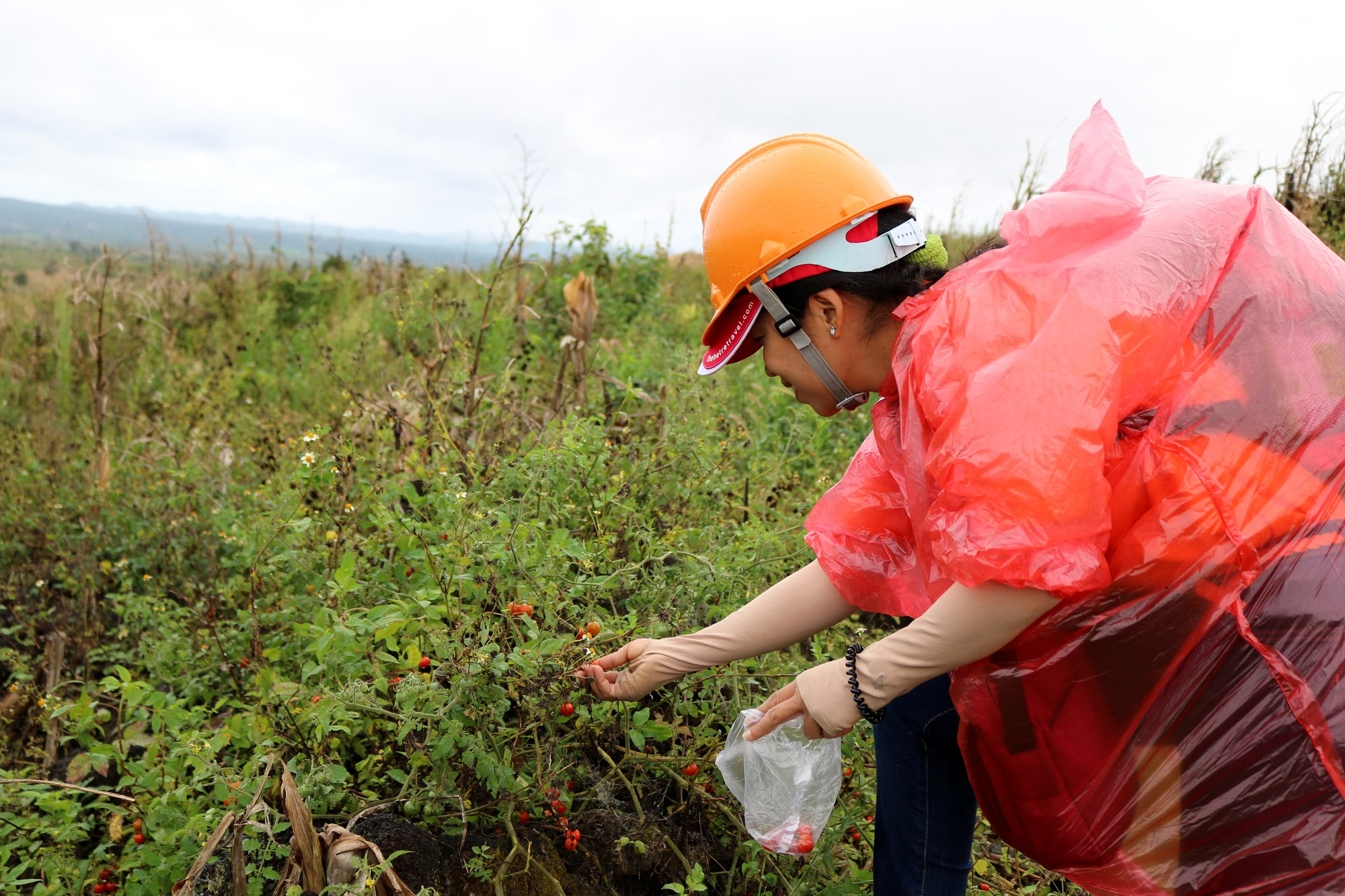 A woman picks wild fruits on the way to the Chu B'luk (Genesis) volcano in Dak Nong Province, Vietnam's Central Highlands. Photo: Tuoi Tre
