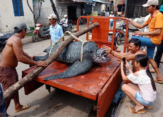 150kg endangered turtle found dead in fishing net off Vietnam's Phu Quoc Island