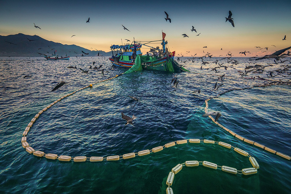 Nets are retrieved at dawn. Photo: TRAN BAO HOA