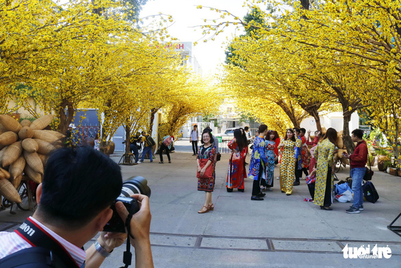 People visit a garden of yellow apricot trees at the Youth Cultural House in District 1, Ho Chi Minh City. Photo: Ngoc Phuong / Tuoi Tre