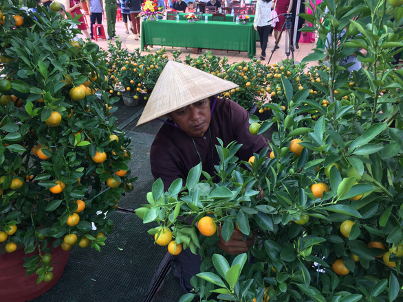 A man shapes a kumquat at a festive event in Hoi An City, central Vietnam, January 2019. Photo: Ba Dung