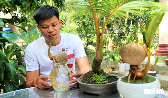 Nguyen Minh Chi shows a coconut shoot with roots in water at his house in Ben Tre Province, southwestern Vietnam. Photo: Mau Truong / Tuoi Tre