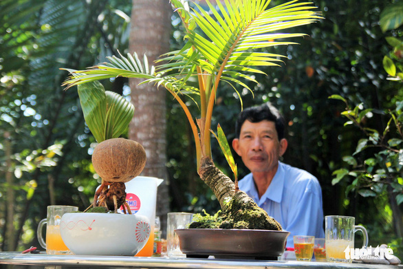 A man looks at a young coconut plant (left) at Nguyen Minh Chi's house in Ben Tre Province, southwestern Vietnam. Photo: Mau Truong / Tuoi Tre