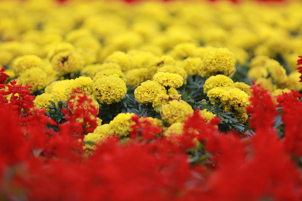Marigolds are used to create the giant trophy. Photo: Tuoi Tre