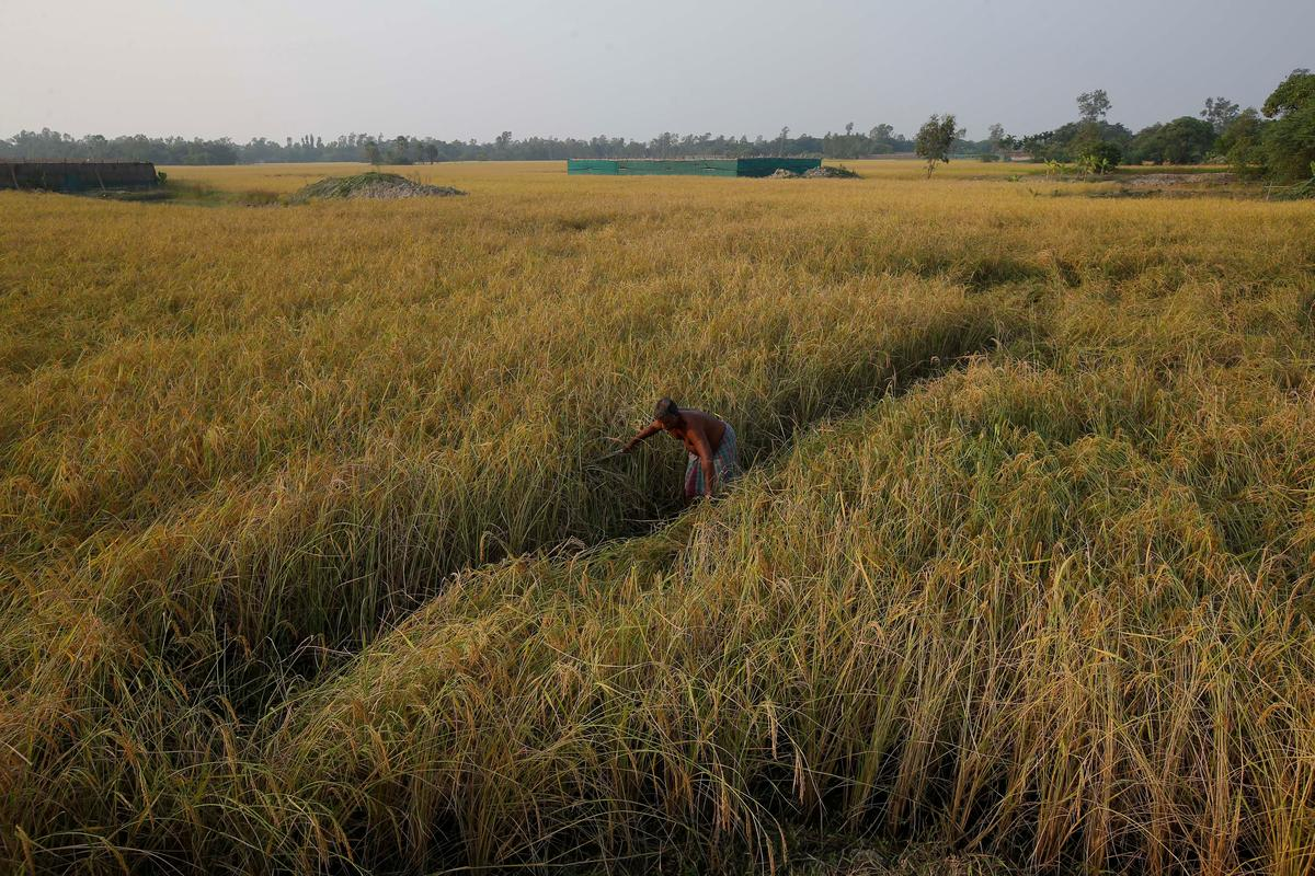 India rice rates rise, Vietnam prices slip before holiday